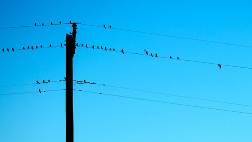 Telephone Wires with Birds